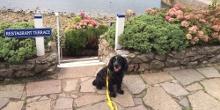 Our Spotlight on Dog-friendly Devon