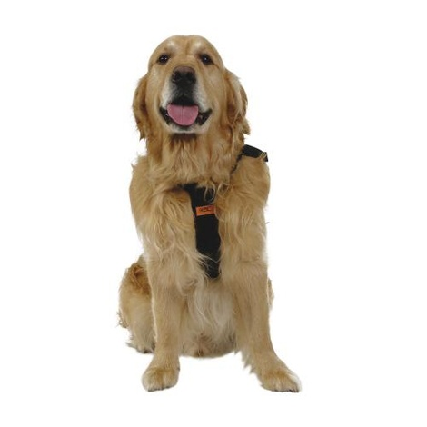 RAC Dog Car Harness  3