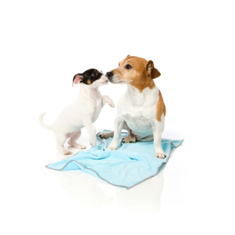 Microfibre Drying Towel for Puppies - Blue and Grey 2