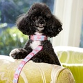 Millie Dog Collar 3