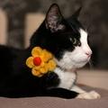 Bloom Cat Collar Flower Accessory - Yellow & Amber