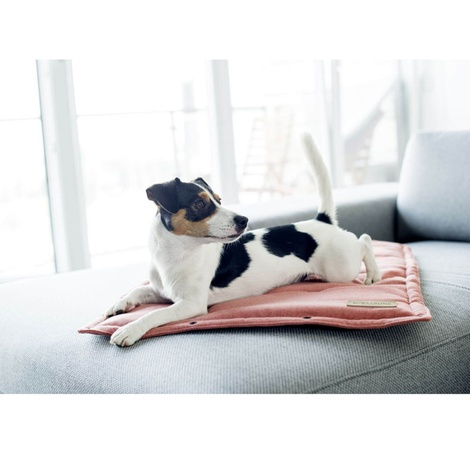 Loft Dog Travel Mat - Coral 5