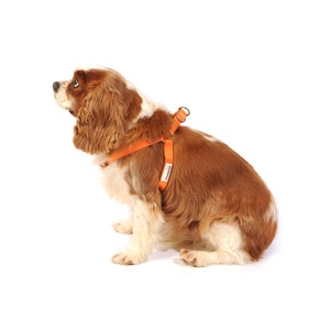 Bold Dog Harness – Orange