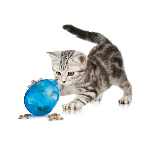 Funkitty™ Egg-Cersizer Cat Toy