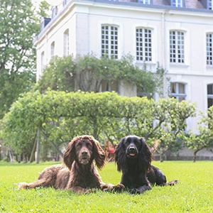 <strong>Our Top Rated Hotels:</strong> Something to suit every breed and budget!