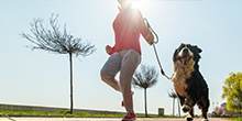OUR TOP 10 PET FITNESS ESSENTIALS
