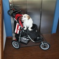 Comfort EFA Buggy - Red/Black 3