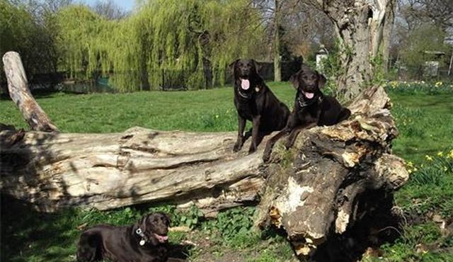 The Dog Hub