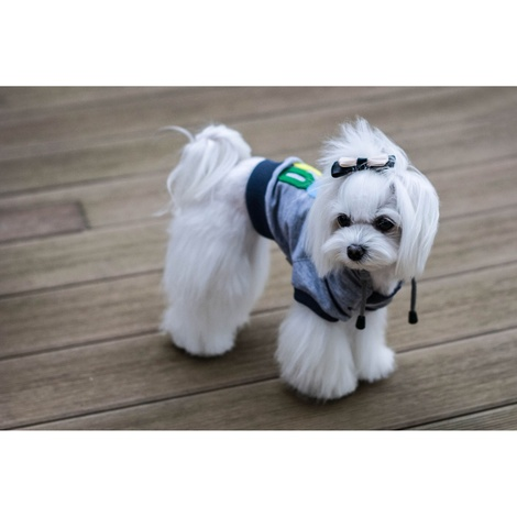 Bowl&Bone Dog YOLO Hoodie Grey 3