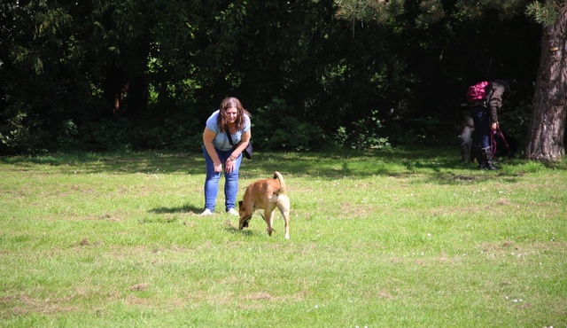 Jackie Murphy Specialist Dog Training 2