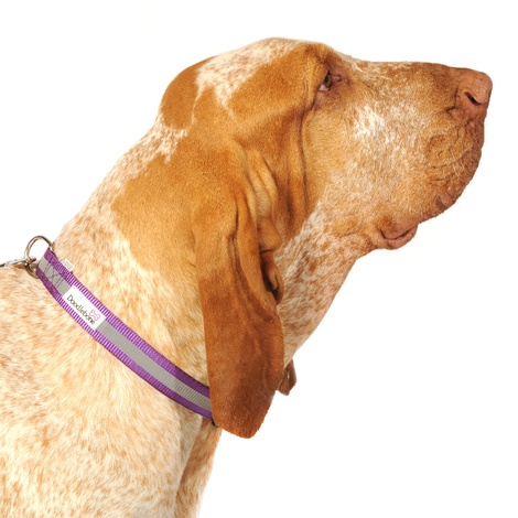 Bold Reflective Dog Collar – Purple  3