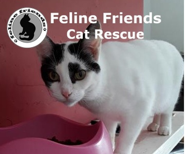 Feline Friends Charity