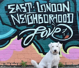 Inspiration 15: Pets & The city