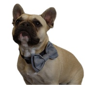 Dapper Pets - Dogtooth Dog Bow Tie