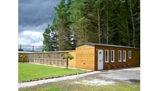 Newfield Cattery