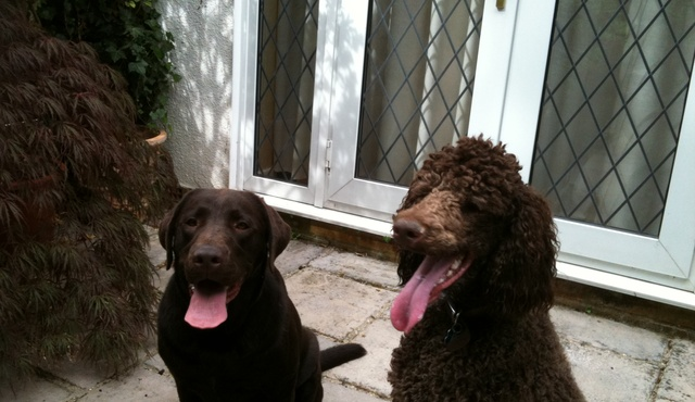 Stansted Dogs and Pet Services 2