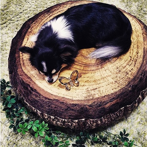 Birch Annual Ring Pet Bed 3