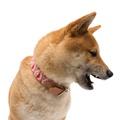 Pink Geo Dog Collar