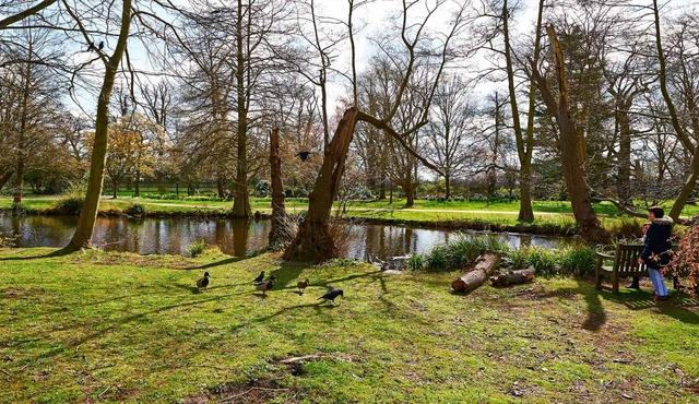 Bushy Park 2