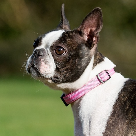 Comfort Padded Dog Collar – Pink 2