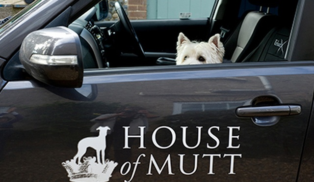 House of Mutt 2