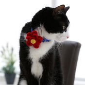 Love from Lola - Bloom Cat Collar Flower Accessory - Crimson & Yellow