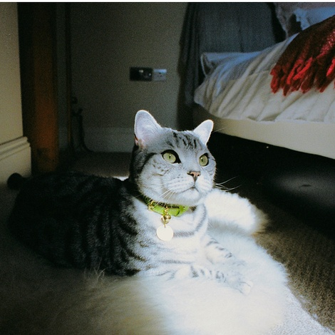 Leather Green Cat Collar 3