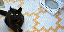 The top pet tech accessories by #tidylife