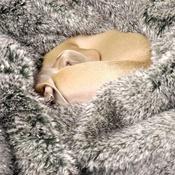 Charley Chau - Faux-Fur & Fleece Dog Blanket - Squirrel