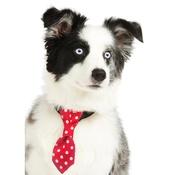 Pet Pooch Boutique - Red Polka Dot Dog Tie