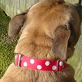 White Dots on Red Dog Collar 5
