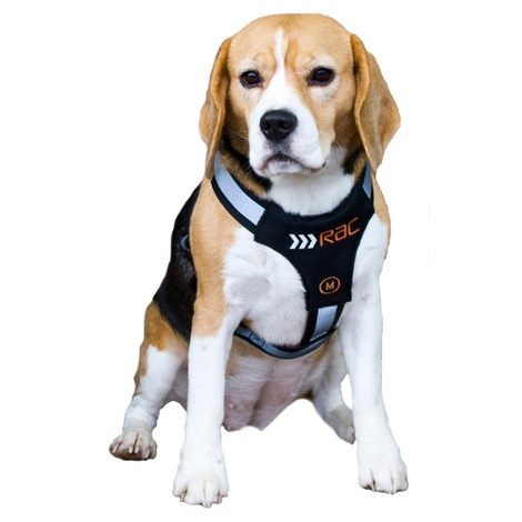 RAC Advanced Dog Car Harness