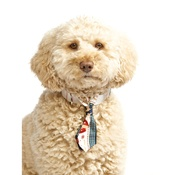 Pet Pooch Boutique - Reindeer Love Dog Tie