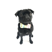 Percy & Co - Collar and Bow Tie - Thurlestone
