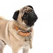 Mutts & Hounds - Oatmeal Leather Tassel Clip