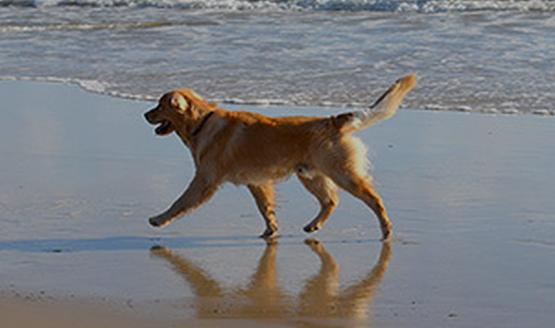 Dog Friendly Holidays And Pet Friendly Travel In Uk Petspyjamas