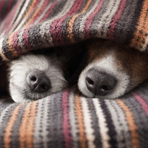 Brrrr! Keep your furry friend safe in the cold weather with our top tips