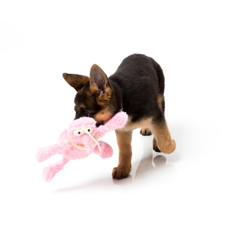 Scratchette the Flea Plush Dog Toy - Pink 4