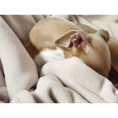 Double Fleece Dog Blanket - Oyster 2
