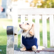 Teddy Maximus - Navy Cable Knit Dog Jumper