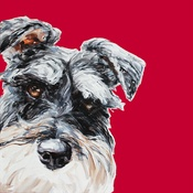 "Paint My Dog  - ""Red"" Schnauzer Art Print"