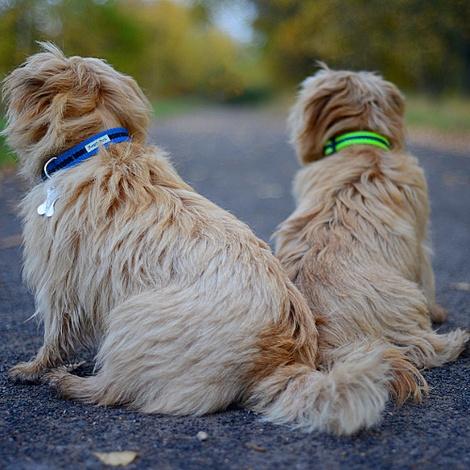 Blue Dog Collar 4