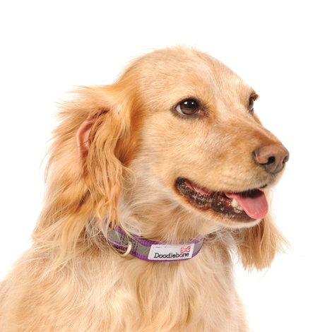 Bold Reflective Dog Collar – Purple  2