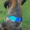K9CREW COBRA Candy Collar (Blue) 5