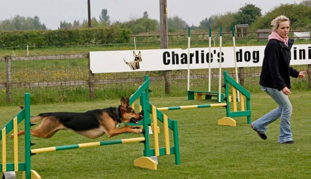 Charlie's Dog Training