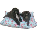 Blue Vintage Floral Cushion Dog Bed