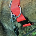 K9CREW COBRA Candy Collar (Red) 3
