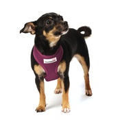 Doodlebone - Airmesh Dog Harness – Purple