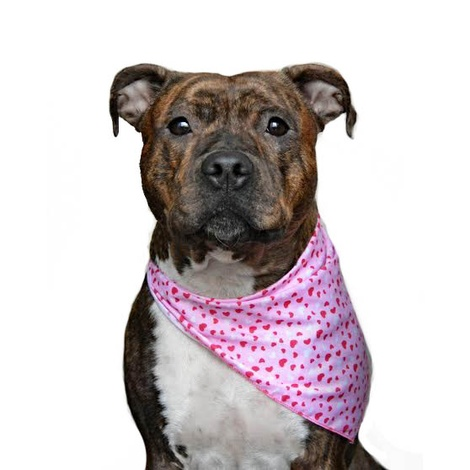 Valentines Love Dog Bandana 2