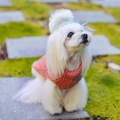 Aspen Dog Pullover - Pink 3